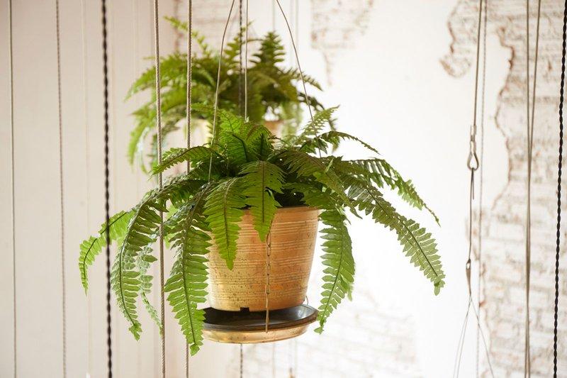 hanging-houseplant.jpg