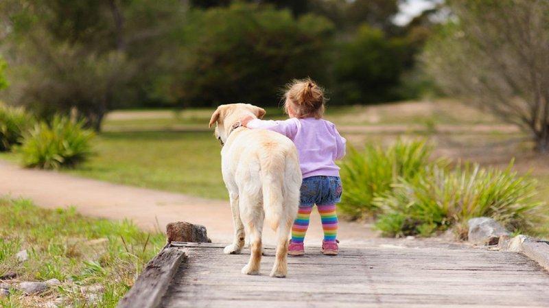 hero persahabatan anjing dan manusia