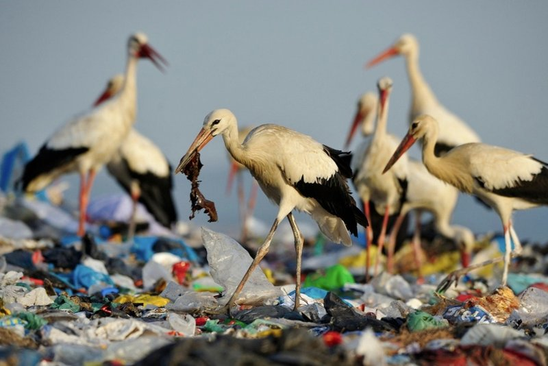 hewan makan plastik.jpg