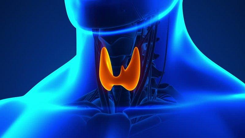 hipertiroidisme vs hipotiroidisme 2.jpg