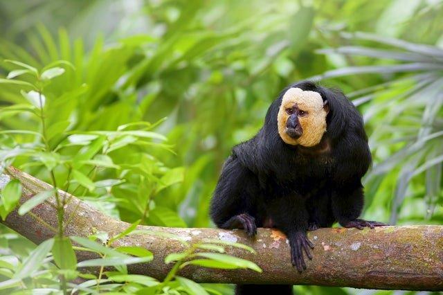 hutan hujan tropis amazon