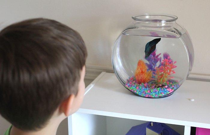 manfaat memelihara ikan, memelihara ikan