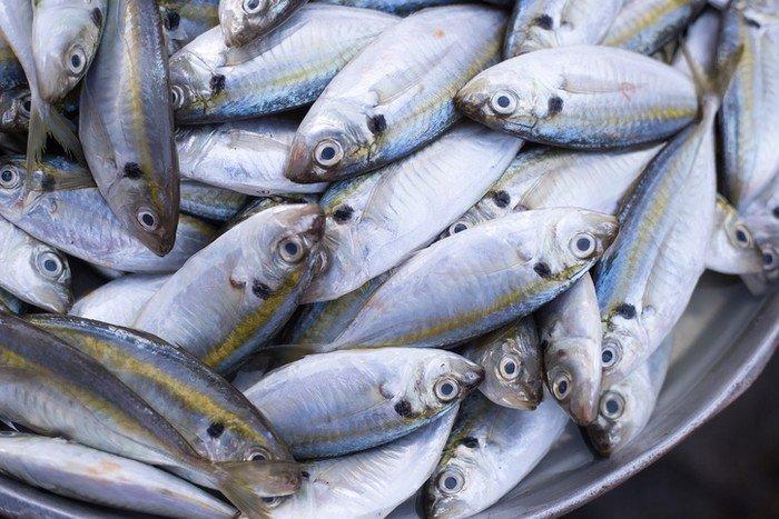 memilih ikan kembung