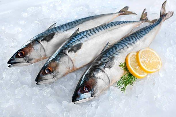 ikan segar.jpg