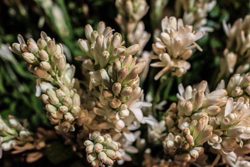 inilah 5 jenis tanaman yang bisa dijadikan sebagai pengharum ruangan 5