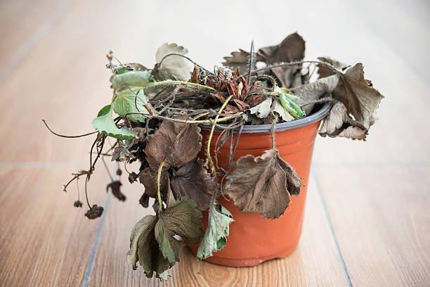 tanaman mati.jpg