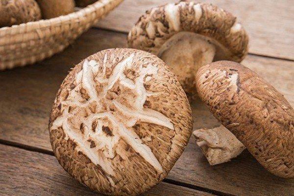 jamur pengganti jamur enoki