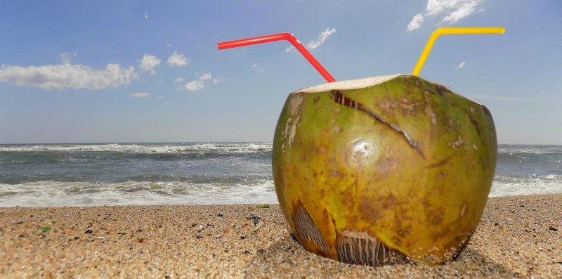 kelapa hijau