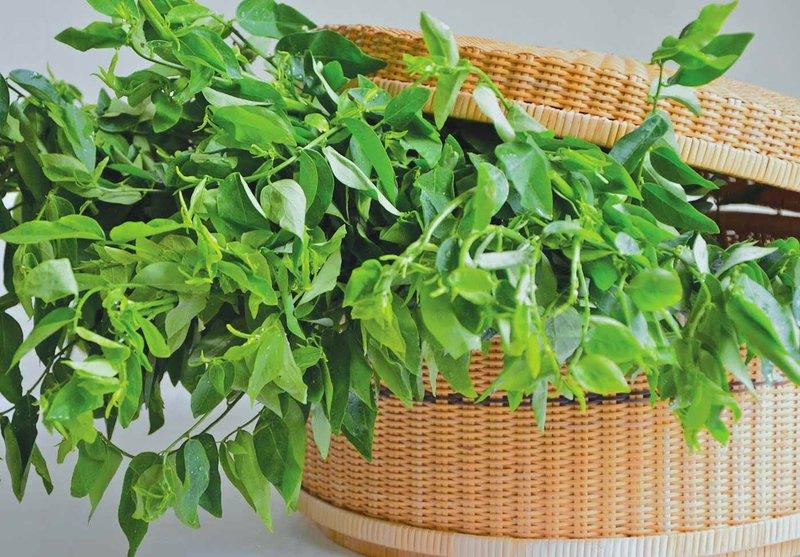 khasiat daun katuk untuk ibu hamil.jpg