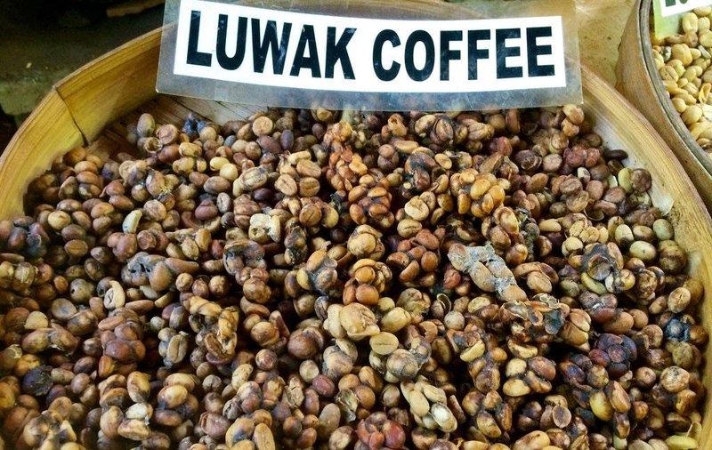 kopi luwak coffee 1