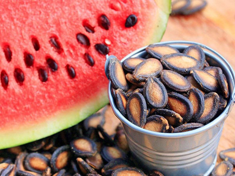 kuaci biji semangka