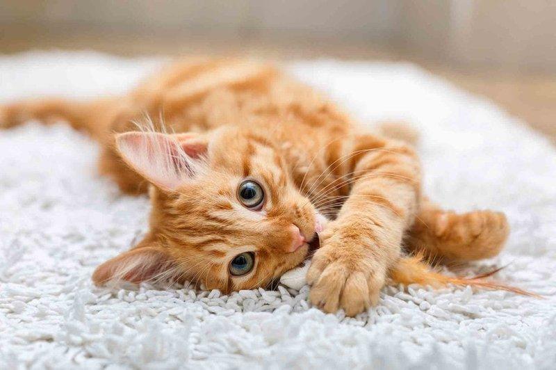 kucing 2.jpg