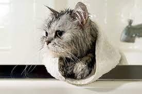 Beri Aroma yang Bisa Membuat Kucing Tenang