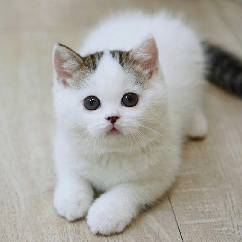 kucing gemas 1.width 800