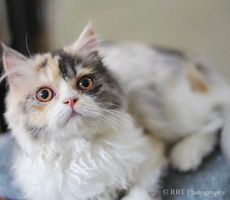 kucing gemas-5.jpg