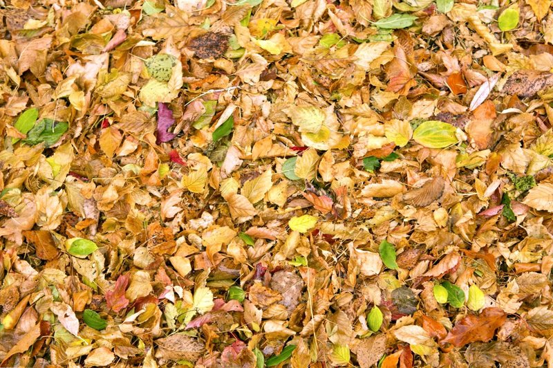 leaf-mulch-info-learn-about-mulching-with-leaves.jpg