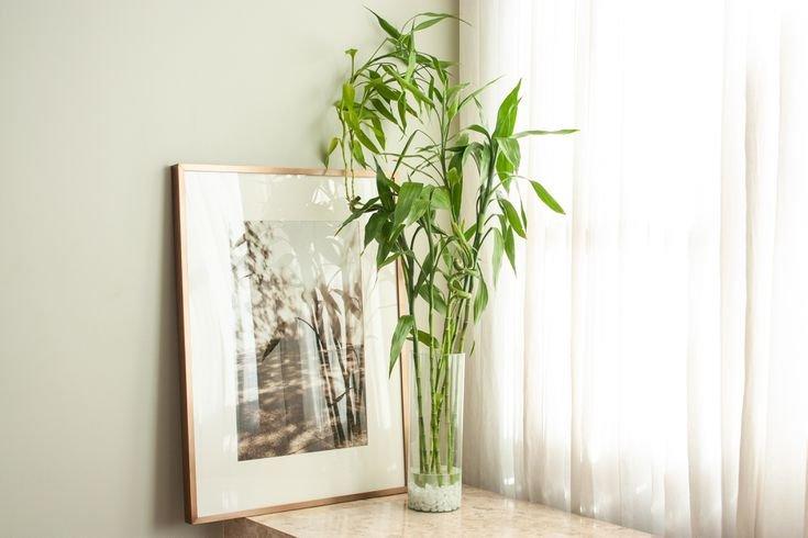 letak bambu rejeki menurut feng shui.jpg