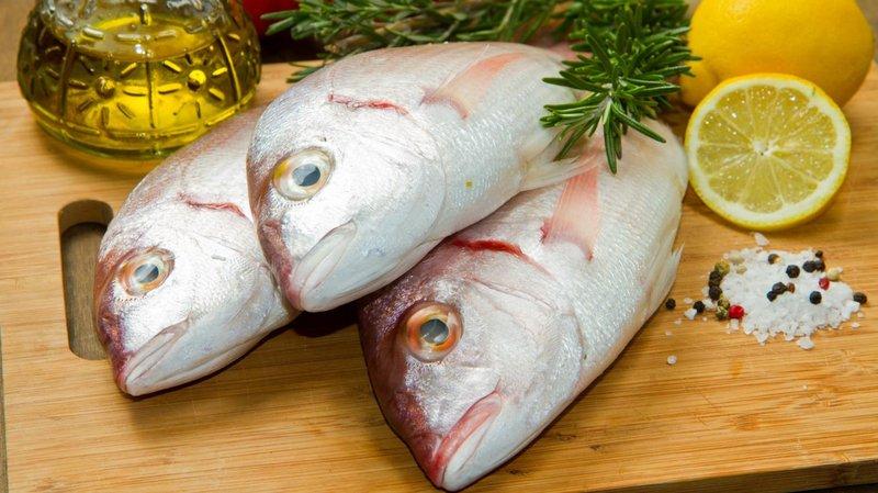 makanan terlarang ikan merkuri