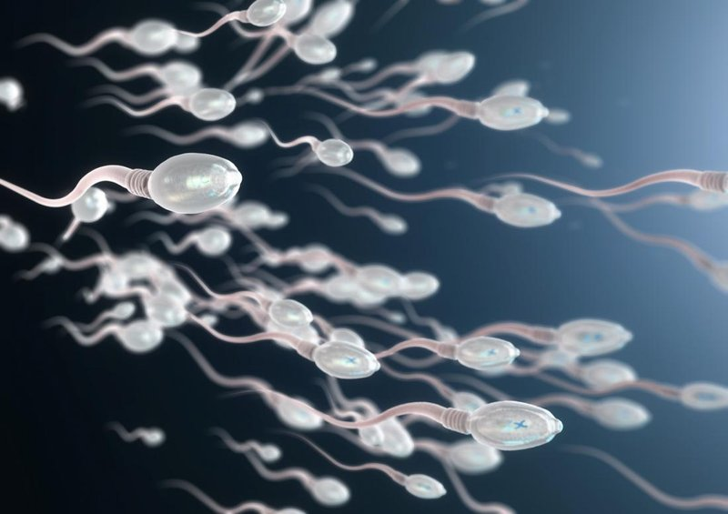 manfaat bawang putih kesuburan pria - motilitas sperma.jpg