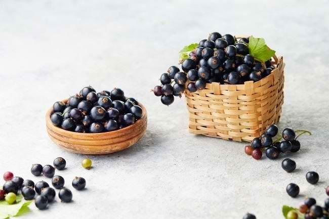 manfaat blackcurrant