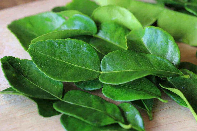 manfaat daun jeruk