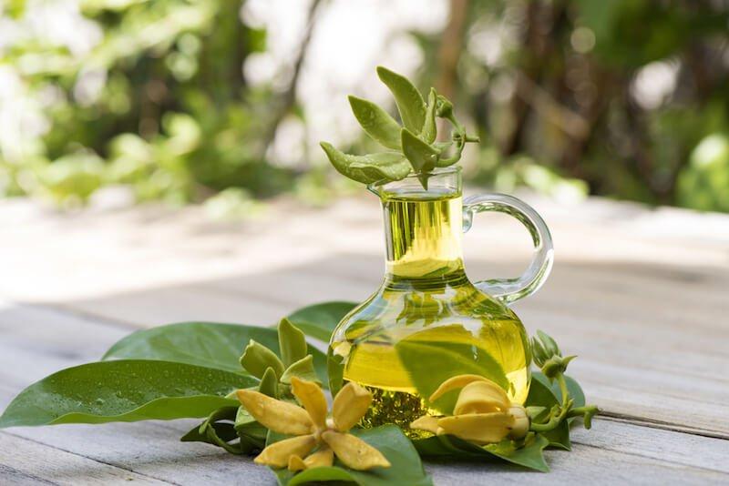 manfaat ylang ylang oil (1).jpg