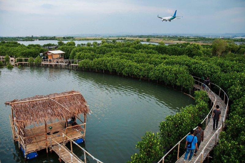 mangrove-edupark.jpg