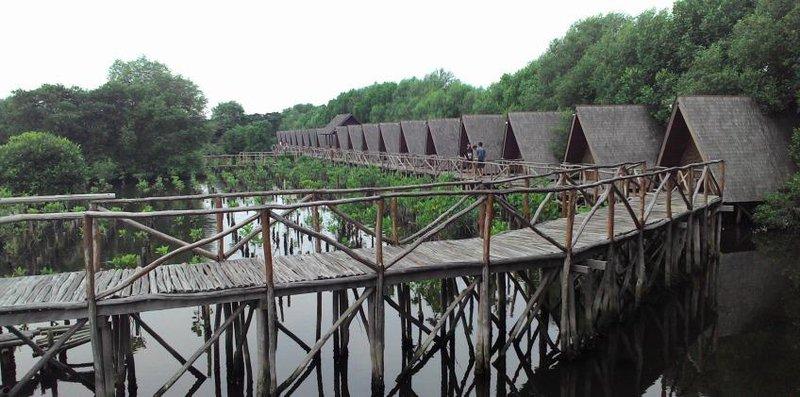 mangrove (848x421) (1)