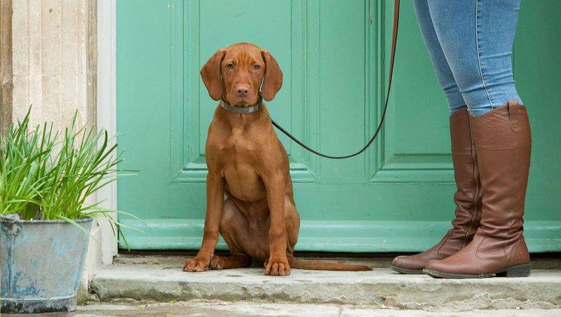 gejala fobia anjing