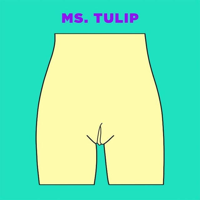 ms tulip vagina illustration