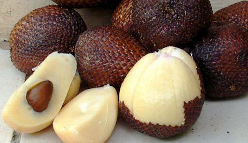 nutrisi buah salak