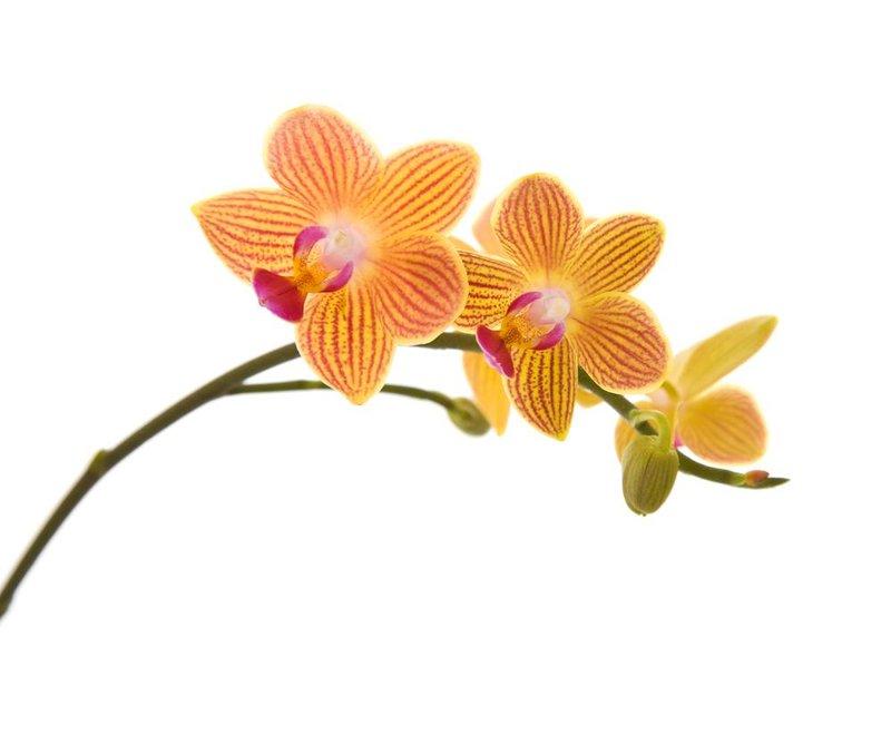 Bunga Yang Cocok Untuk Moms Berdasarkan Zodiak Berbagi Tips