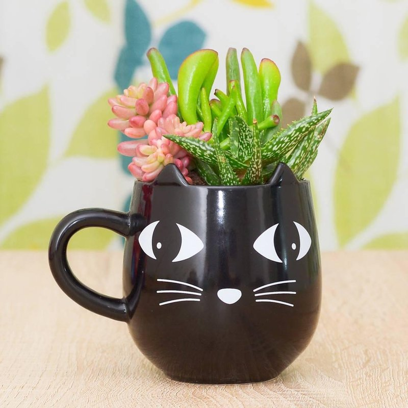 original black cat mug planter with plants