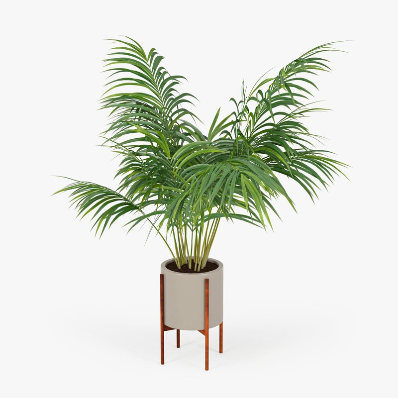 palm pot 3d model max obj fbx