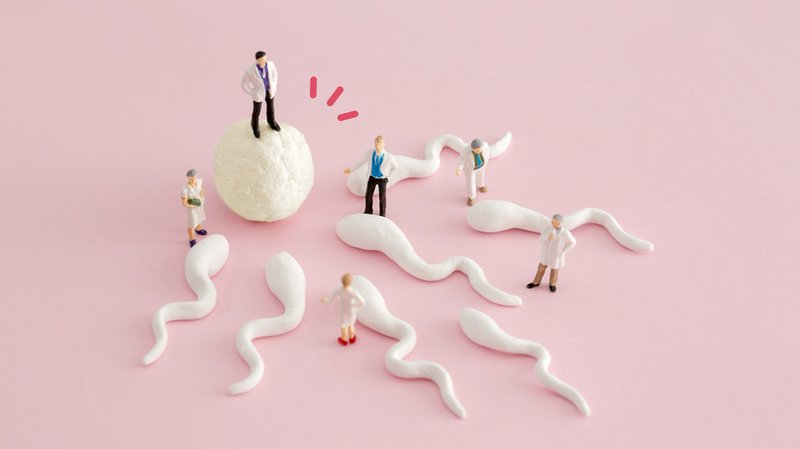 penyebab-sperma-tidak-masuk-ke-indung-telur.jpg