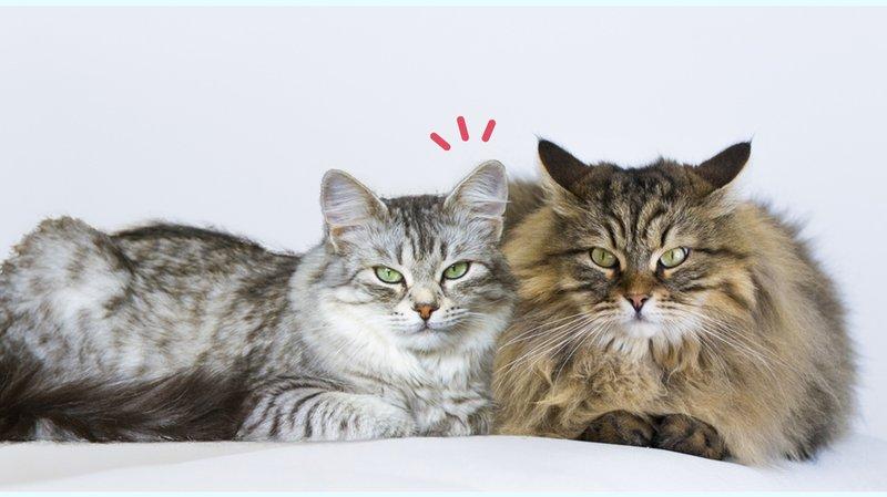 perbedaan-kucing-jantan-dan-betina.jpg