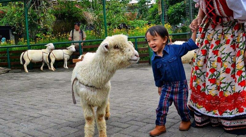 petting-zoo-di-Farm-House-800x445.jpeg
