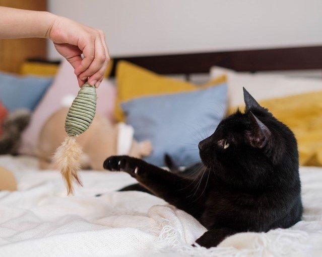 Kepribadian kucing hitam
