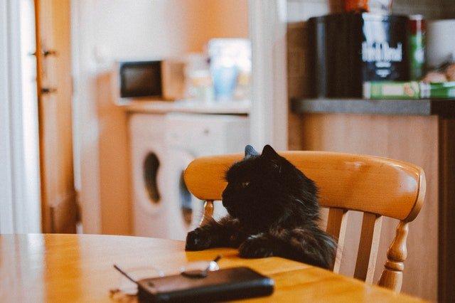 Kafe kucing hitam