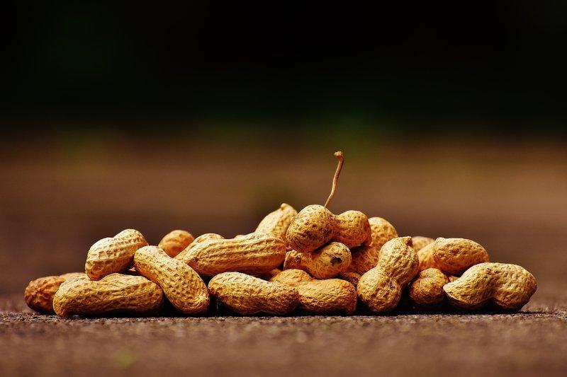 Nutrisi Kacang Tanah