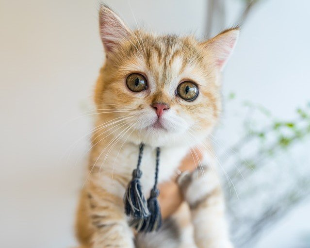 Kucing orange suka dimanja