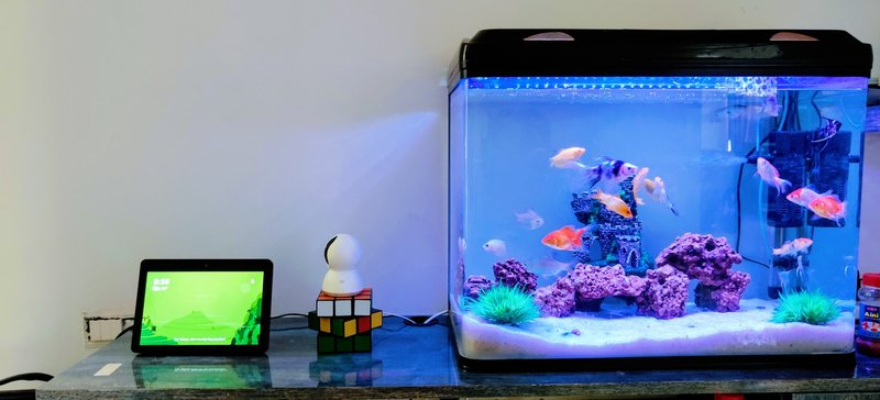 Penuhi kebutuhan ikan akuarium