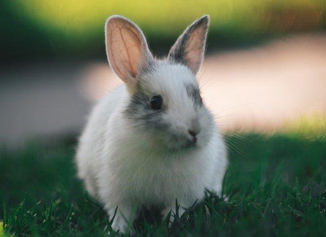 Hewan lucu kelinci