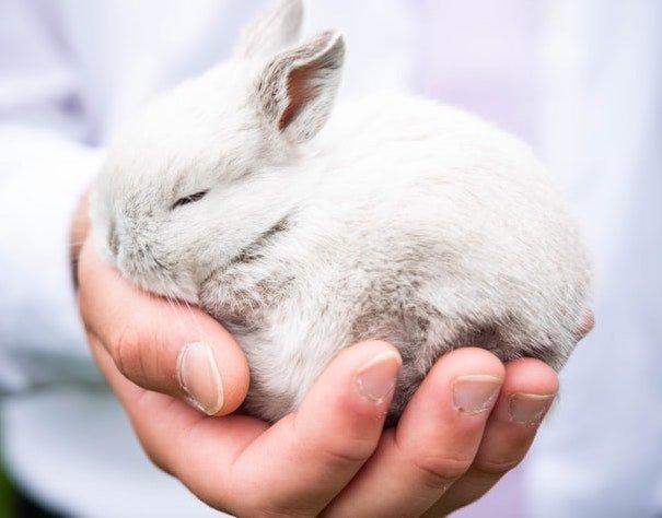 Kuku kelinci juga perlu dipotong
