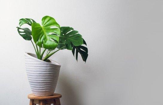pilih tanaman indoor yang sesuai.jpg