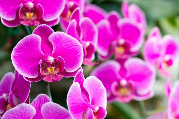 Bunga anggrek dapat melembapkan kulit