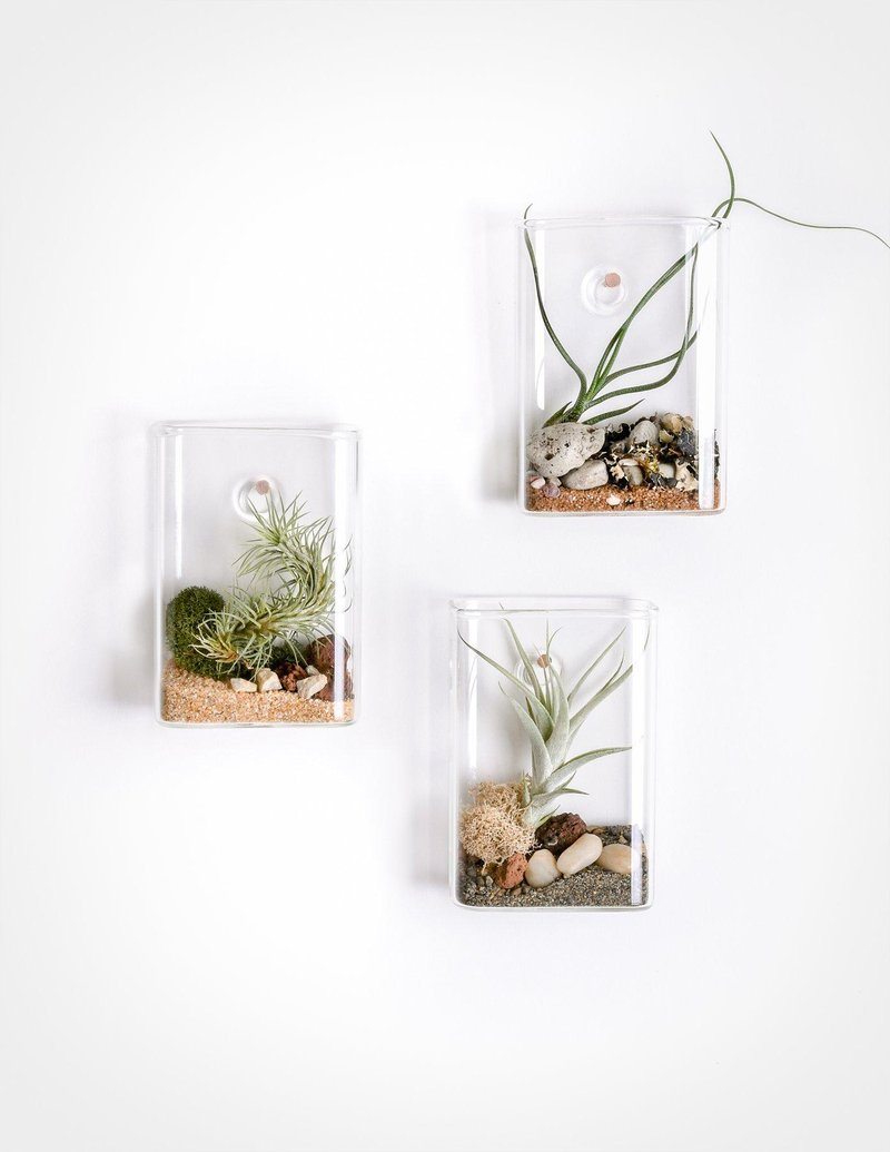 pocket aerium wall mounted terrarium pistils nursery