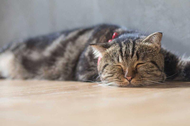 poorly-cat2.jpg