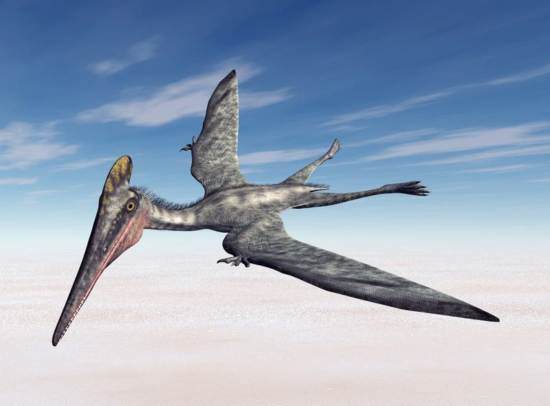 pterosaur-stock-photo.jpg