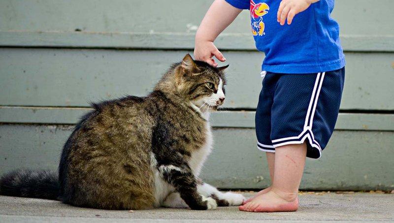 punya kucing dan balita dirumah cek dulu 4 hal berikut ini ya moms 1